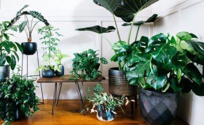 26 cây trồng trong nhà không cần ánh sáng không thể bỏ qua cho người yêu cây cảnh