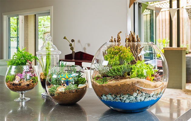 Hướng dẫn 4+ bước tự trồng cây trong lọ thủy tinh cực đẹp trang trí nhà