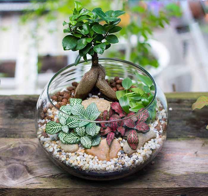 Những cách trồng cây trong lọ thủy tinh