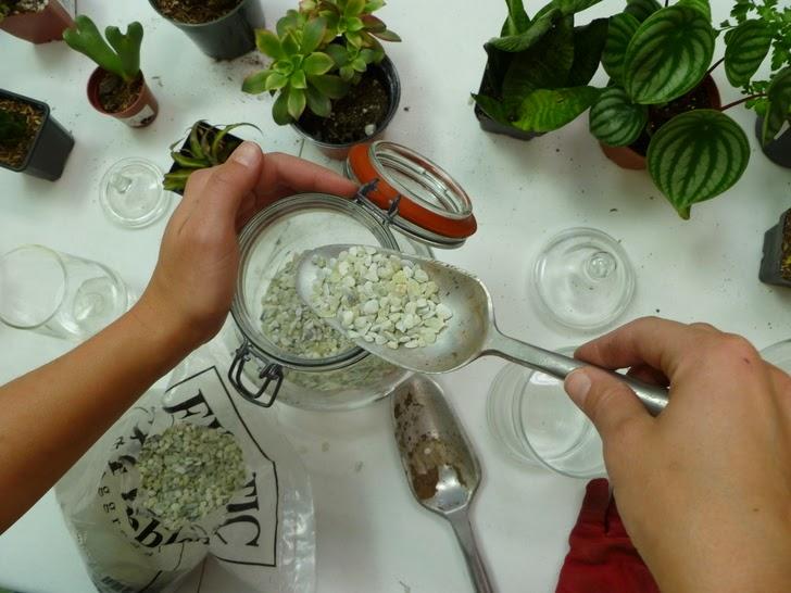 Thực hiện trồng cây cảnh trong lọ thủy tinh